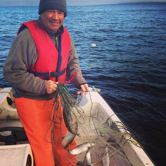 Fiske i Sundsvall. 6 nät, 35 sikar och 1 öring! #fiske #högön #öring #sik