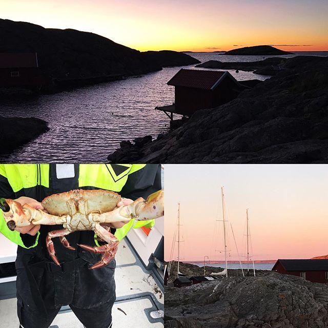 Efter en helg med hummerfiske på västkusten som mest liknade krabbfiske så rullar vi norr över och inväntar snön och skidåkningen!#väderöarna #fjällbacka #bergsresor