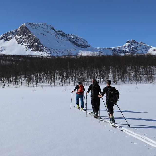 Äntligen tillbaka på Nonsfjellet, fin topp och bra skogsåkning!#foldvik #narvik #bergsresor #elevenate #genuineguidegear #canon