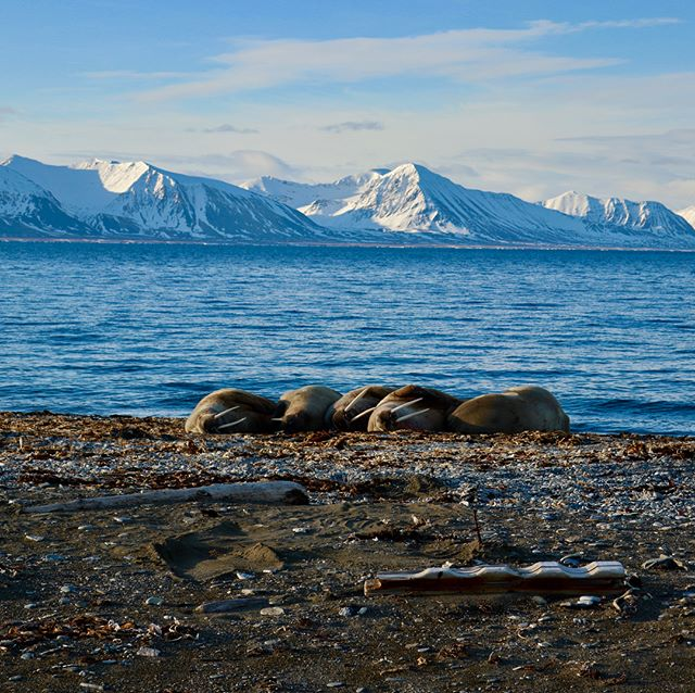 Svalbard levererade som vanligt toppturer och upplevelser av bästa sort! #svalbard #bergsresor #arcticguides #elevenate #dynafitsweden #genuineguidegear